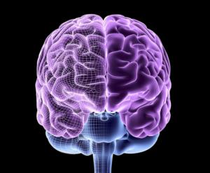 La teoría sobre la memoria de trabajo a largoplazo